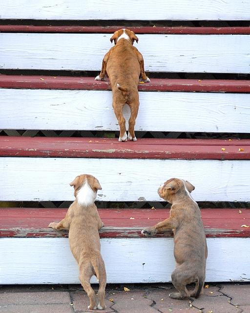 Puppiesonstairs_0.preview